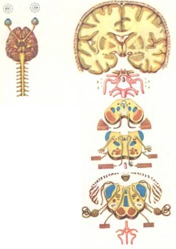 sindromul Gradenigo