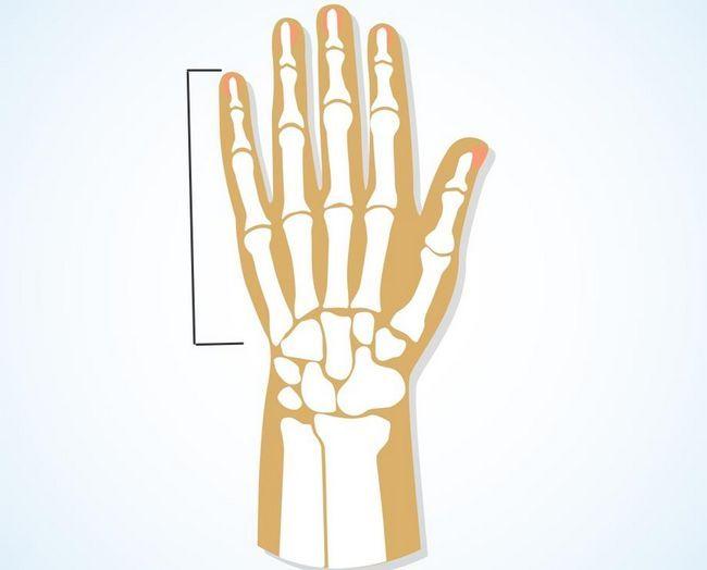 Фаланги пальцев рук