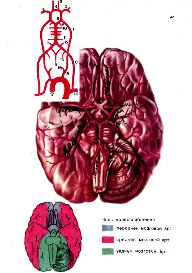 Schema se răcească sânge cerebral