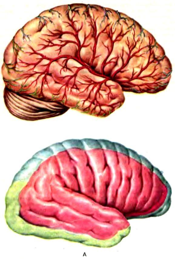 Zona vascularizării creierului