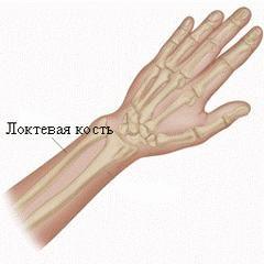 Локтевая кость