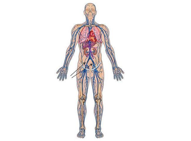 Подвздошная артерия