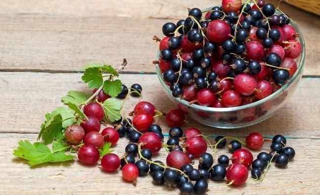 Черная смородина и крыжовник - источники витамина P